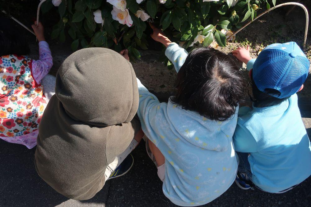 ご近所の花壇観察中